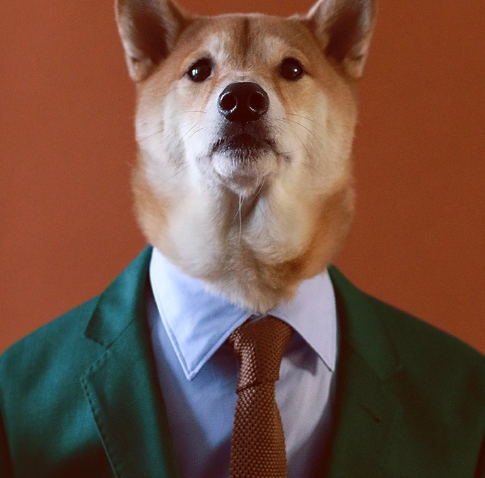 The Dapper Dog That Most Likely Beats You At Being Stylish