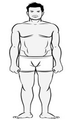 Endomorph body type